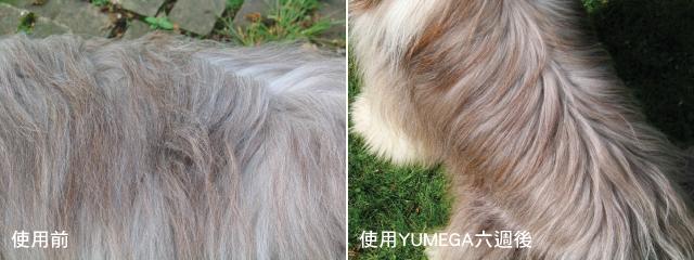 product-yumega-dog-before-and-after