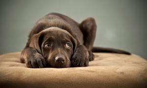 如何幫助狗狗克服鞭炮恐懼?