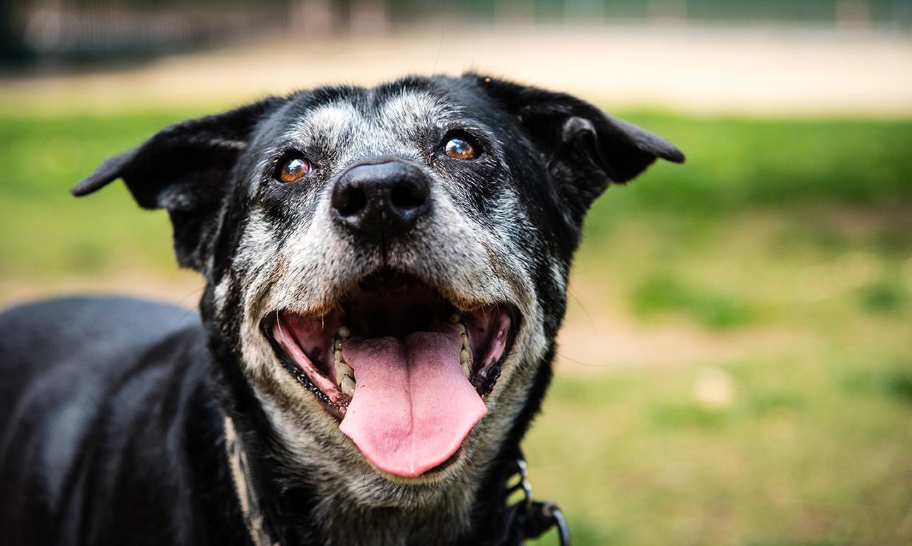 幫助老狗狗體態健康指南